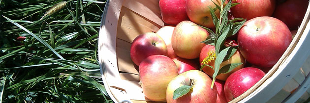 apple-basket-jpg