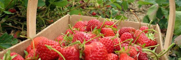 pyo-strawberries-3-jpg