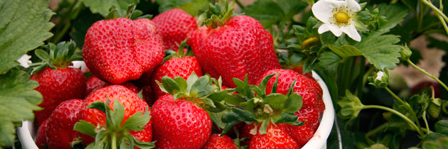 pyo-strawberries-5-jpg
