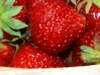 pyo-strawberries-2-jpg