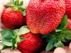 pyo-strawberries-4-jpg