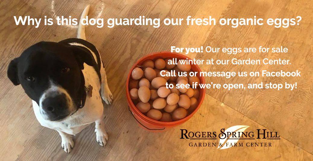 eggs slider 2018