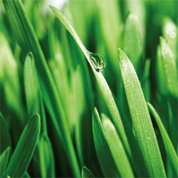 spring_lawn_3