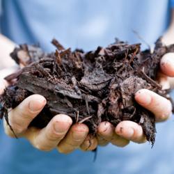 soil_4